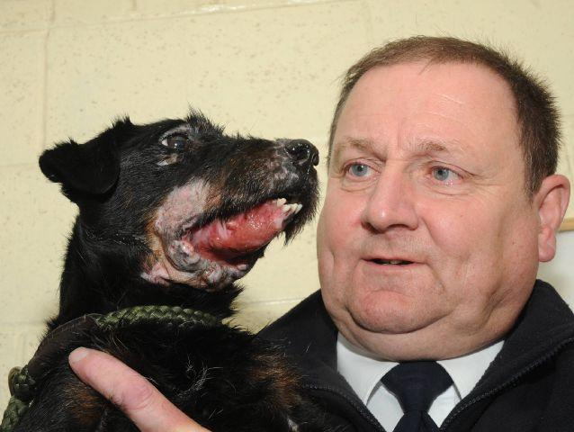 Dog Used For Badger Baiting Recovering Slowly Rspca Times