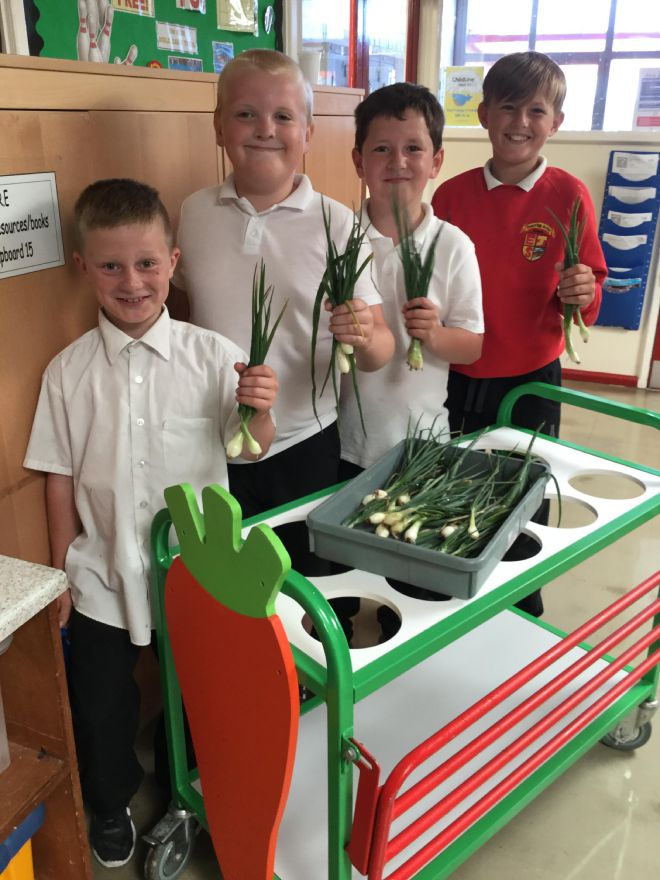 24 June 2016 Submitted picture. Ewanrigg Junior School pupils Dennon Woodburn, Connor Irving, Luke Banks, Bradley Johnson are part of a group who have been growing vegetables at the school to help them learn about food technology and healthy eating.