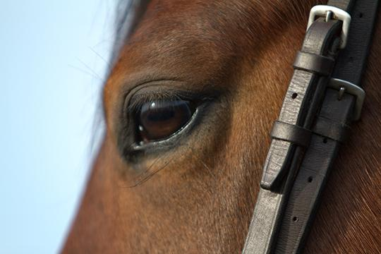 New horse identification rules in force in England